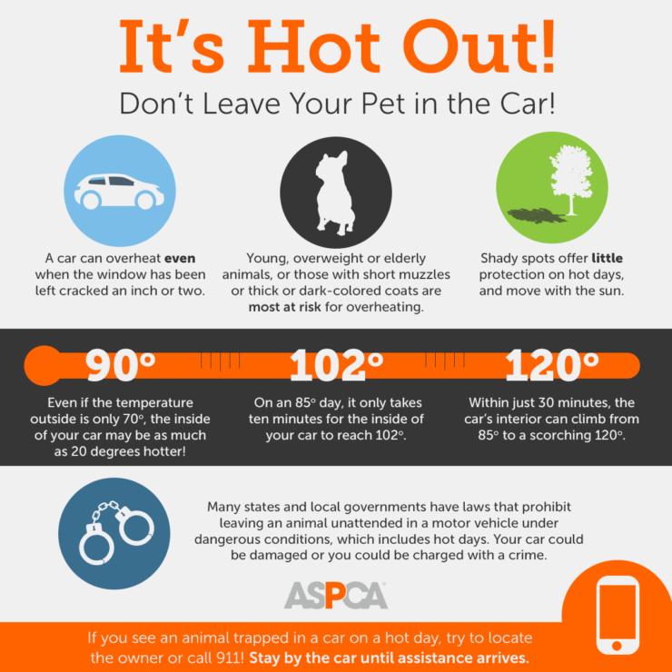 ASPCA Info Graphic