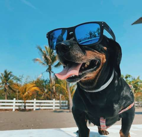 6 Ways To Keep Your Pets Cool This Summer