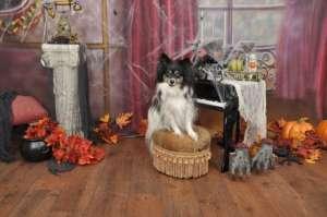 Halloween Pet Photos with LJ's Photography