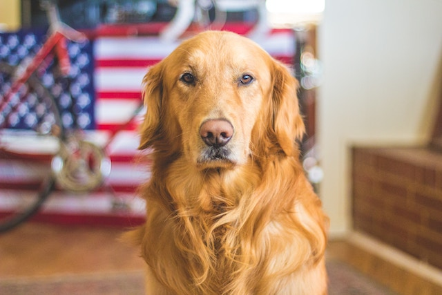 Giving A New Leash On Life To Rescue Dogs And Military Heroes