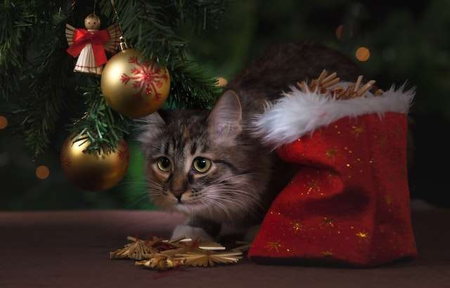 Helpful Tips For a Safe and Happy Holiday Season With Your Pets