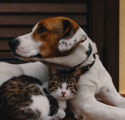 Tips To Ensure A Smooth Homecoming For Your New Pet