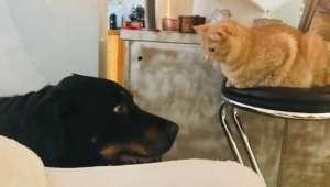 Dog & Cat Standoff