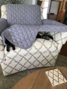 Bella Hiding