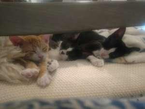 Foster Kitties
