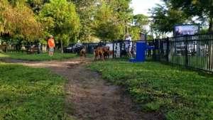 Entering the Dog Park