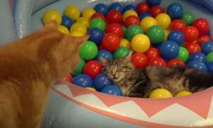 Ball Bath for Cats