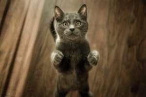 Cat Begging