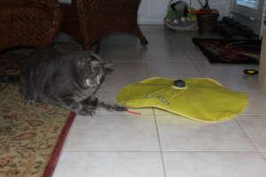 Otis Chasing Mice Tail