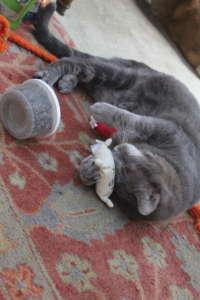 Otis With Yarn Toy & Catnip