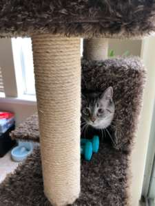 Pussyrat in Tower