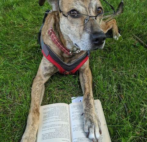 10 Summer Beach Reads for Dog Lovers