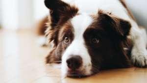 Reassured Dog