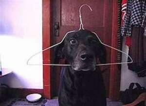 Dog In A Hanger