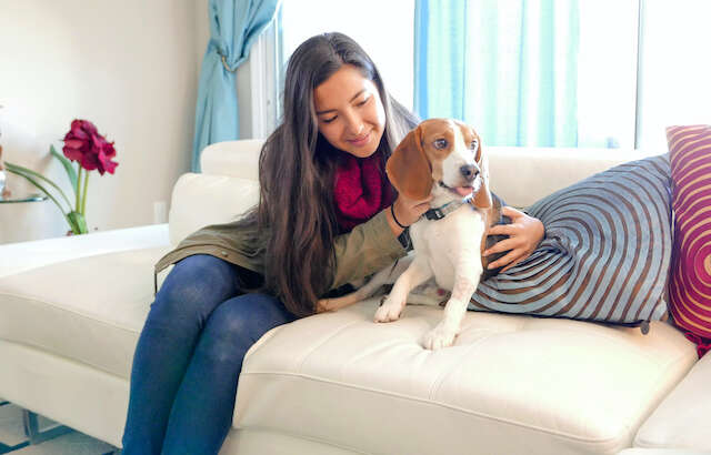 Why Hire a Professional Pet Sitter?
