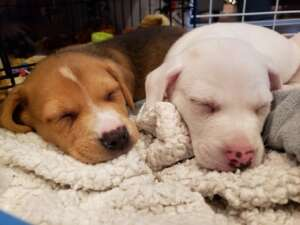 Puppies 1-2
