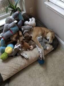 Dexter & His Toys