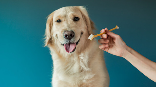 Your Pet's Oral Health Is Important