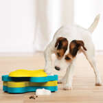 Dog games and interactive toys