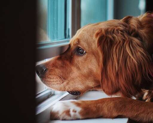 Helping Your Pet With Separation Anxiety