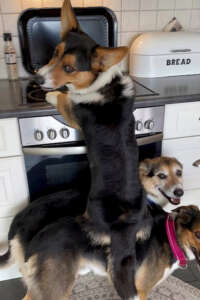 Counter Surfing Dogs