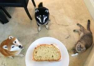 Kokushou Sophie & Pearl Begging
