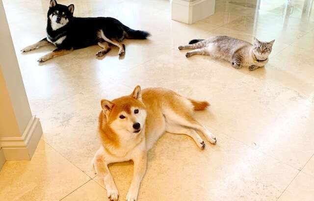 VIPP Dora Syin, Sophie, Kokushou & Pearl
