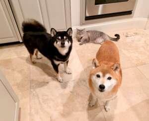 Kokushou Sophie & Pearl in Kitchen
