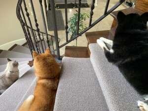 Kokushou Sophie & Pearl on stairs