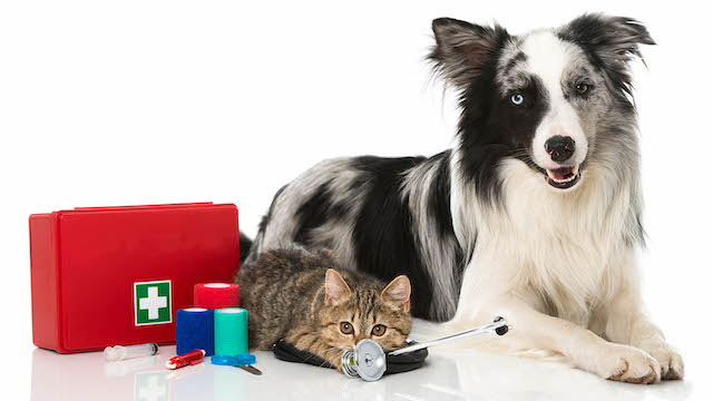 Pet First Aid Tips Every Owner Should Know