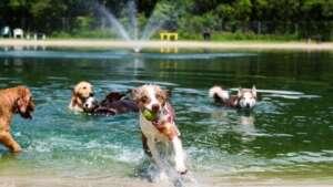 Dog Wood Dog Park