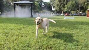 Julington Creek Animal Walk Dog Park