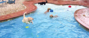 Julington Creek Animal Walk Group Swim