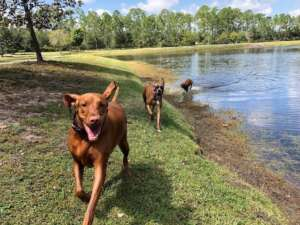 Trails for Tails Dog Park