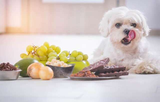 5 Common Foods That Are Toxic To Pets & What You Can Do
