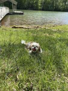 Bugsy at the Lake