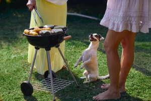 Dog at BBQ