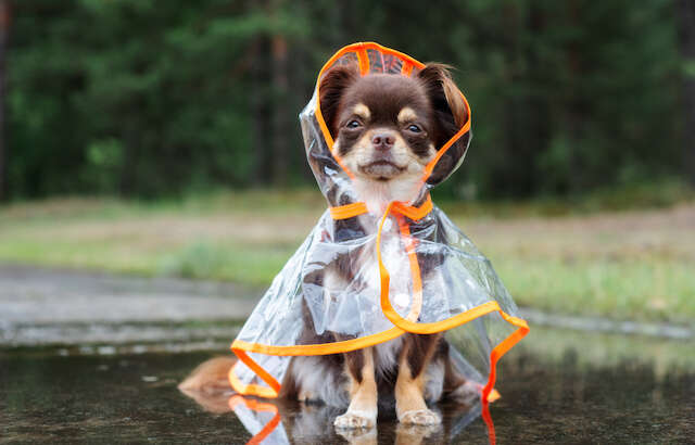 Rainy Day Dog Essentials to Stay Dry, Calm, and Entertained