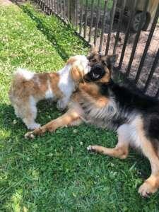 Molly & Bugsy